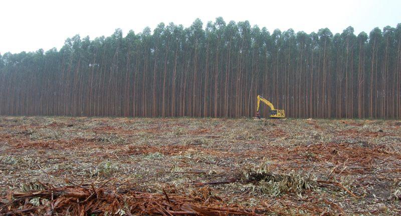 urwald, wald, regenwald, vernichtung, zerstörung, holzwirtschaft, roden, rodung